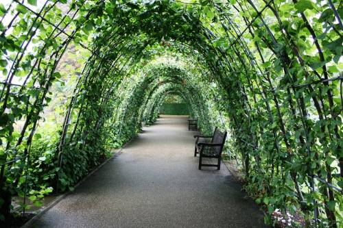 Taken from: https://pixabay.com/static/uploads/photo/2014/01/27/03/28/tunnel-of-plants-252820_960_720.jpg under CC; thx