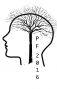 tree-with-roots_brain_pf2016_small.png